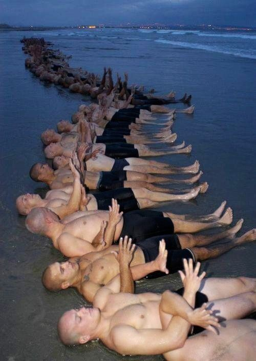 Are navy seals better than marines