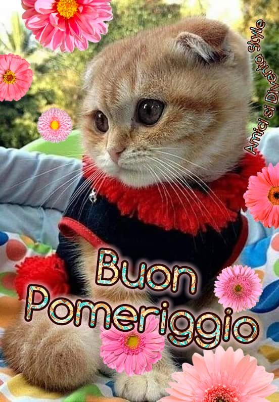 Pin di Alcuervo su Buon Pomeriggio   Gattini divertenti, Adorabili gattini,  Buon pomeriggio