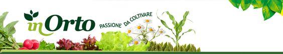 Il cumino, come coltivarlo e utilizzarlo   InOrto - Guida all'orto fai-da-te. Istruzioni e consigli per coltivare le tue verdure