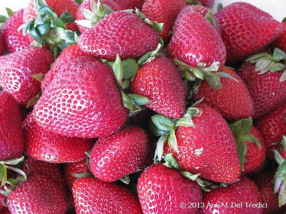 Strawberries: these are organic and delicious...and they are from Trader Joe's, believe it or not! Photo © 2013 Ann M. Del Tredici
