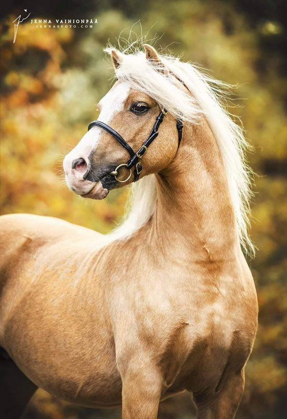 Pin By Xeno Phrenia On Oh I Like That 04 Beautiful Horses