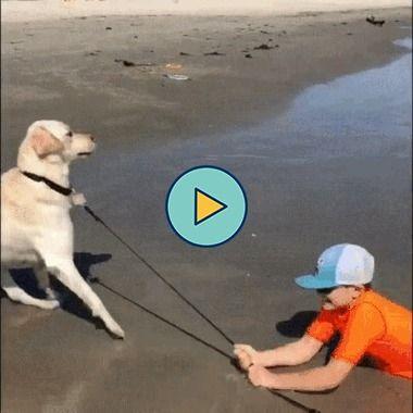 o cachorro preferi andar só