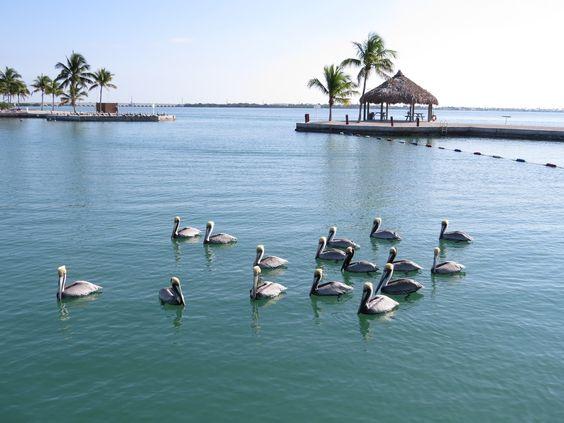 RV Lot for Rent in Florida Keys  Venture Out Resort, Cudjoe Key, Florida Mile marker 23