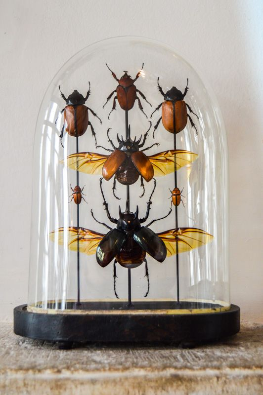 Insects: The taste of Petrol and Porcelain | Interior design, Vintage Sets and Unique Pieces www.petrolandporcelain.com