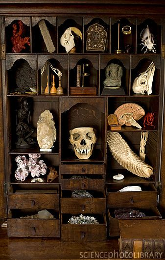 A private cabinet of curiosities. Items include from top left, red coral, venus flower basket, macaw skull, Tibetan shrine, lens condenser, spiny shell, chinese ink case, sea bird skull, microscope and miniature book, Thai Buddhist idol, ostrich skull, starving Budda figure and handaxe, medical specimen skull, plaster brain model, chinese compass clock, Tasli Russian devil, giant barnacles, preserved fish, mammoth tooth, carved dragon.
