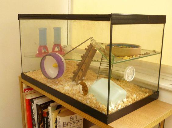 Animals For Gt Glass Hamster Cage Casa Fluffer Mcscruffer