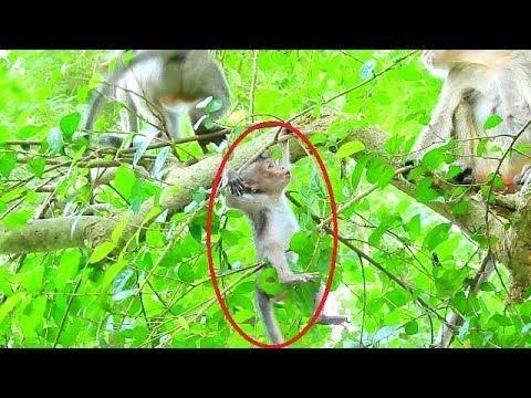 Lori The Victim The Crime The Criminal Youtube Baby Monkey Pet Falling Down Monkey Dance
