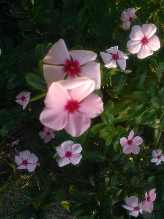 wildflower_2