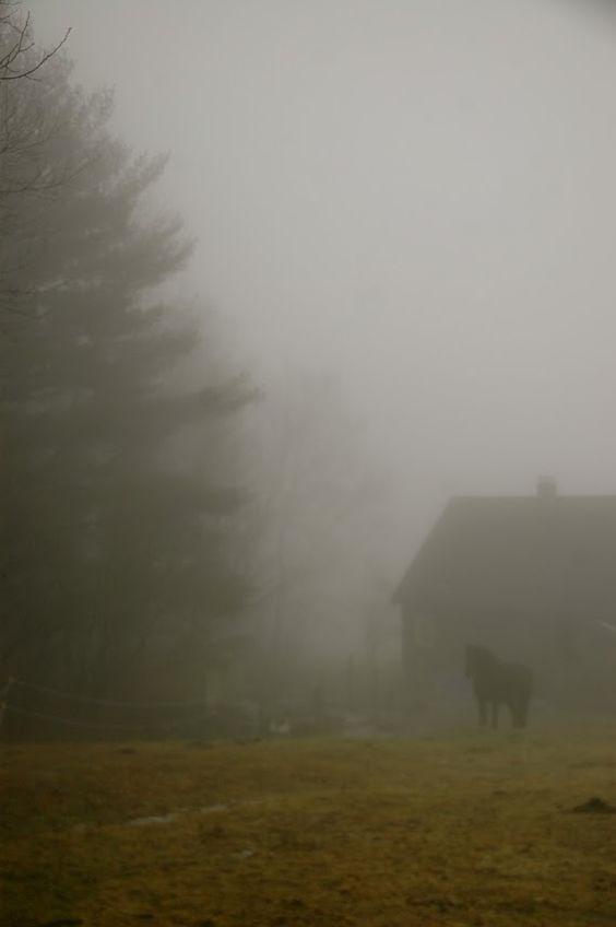 lovely fog
