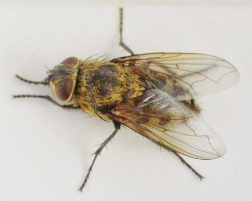 Where Do Flies In The House Come From Discover Some Surprising Reasons You Have Flies In Your Home Bestpestcon Best Pest Control Insect Control Pest Control