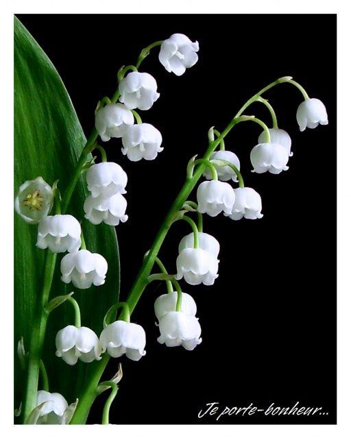 carte muguet imprimer gratuit Épinglé sur fleurs