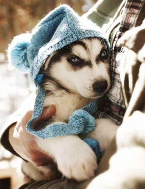 This pup is ready for the cold weather.