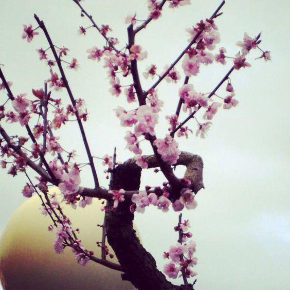 Primavera...