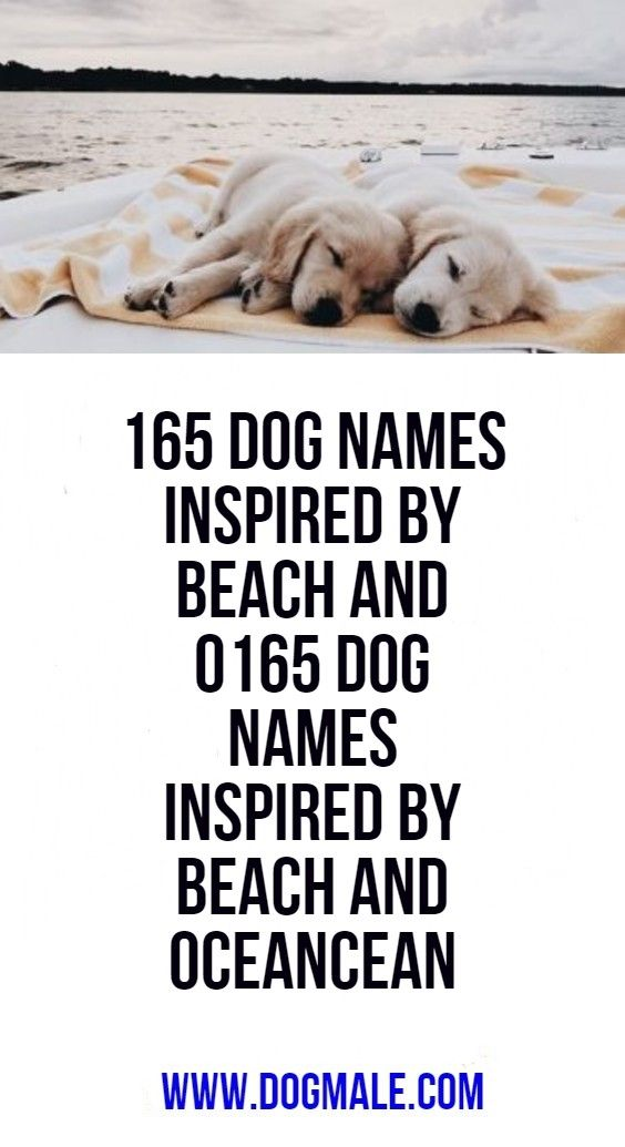 165 Dog Names Inspired By Beach And Ocean Dog Names Funny Names For Dogs Dog Names Male