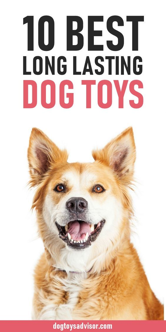 Tired Of Keep Buying Your Dog New Toys Here Are 10 Dog Toys That