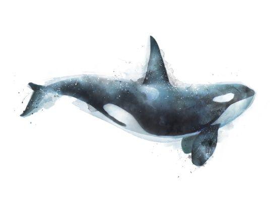 """""""Orca"""" by Amy Hamilton"""