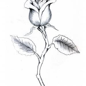 Rose Stem Drawing Tattoo With Rosebud