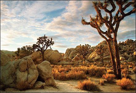 Joshua Tree National Park (12 Palms, California)