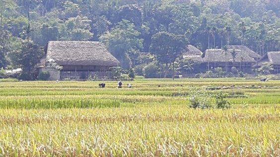 Paysages authentiques du village de l'ethnie Cao Lan à Yen Son. Http://aventure-vietnam.com:
