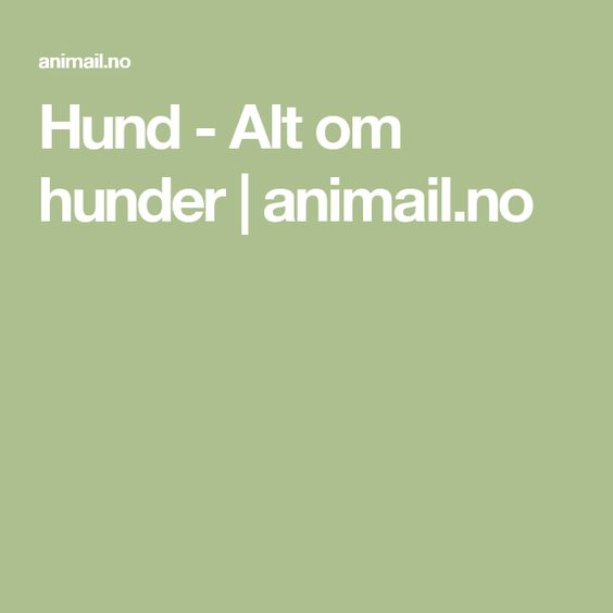 Hund - Alt om hunder |animail.no