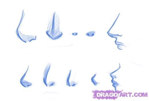 Nose Types Female Drawing Google Search Nose Drawing