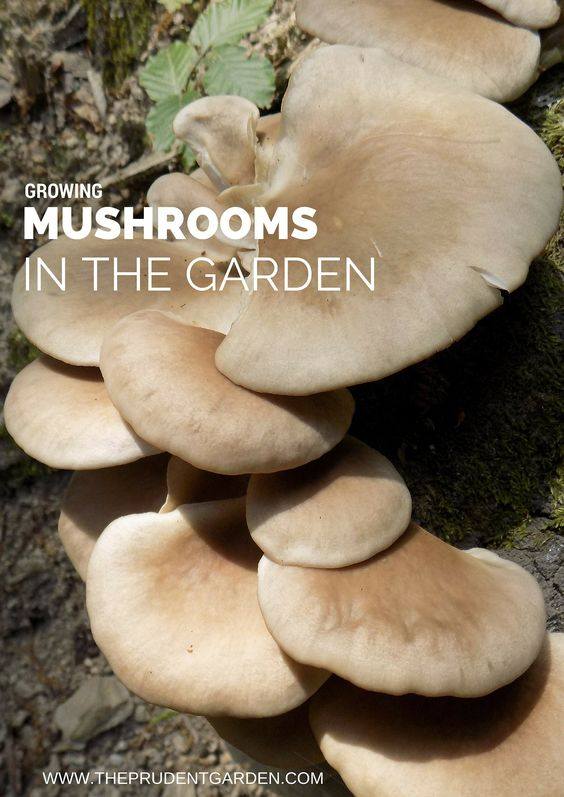 Growing mushrooms is a way to improve soil, increase garden efficiency and enjoy healthy homegrown produce. Here are 5 ways to grow your own mushrooms.