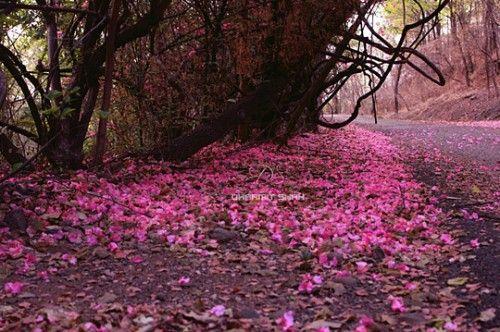 صور الطبيعة 2017 أجمل صور خلفيات طبيعية للفيسبوك 2018 أحلى رمزيات واتس آب للطبيعة الجميلة الخضراء Beautiful Nature Hd Elmstba C Outdoor Pictures Nature Outdoor