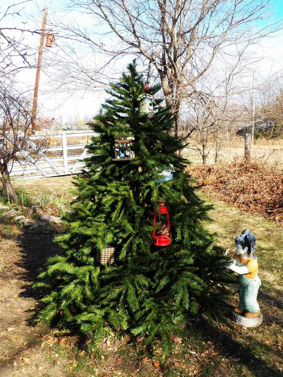 recycled my mousey smelling xmas tree into the bird haven garden, hung birdhouses on it and will add more.