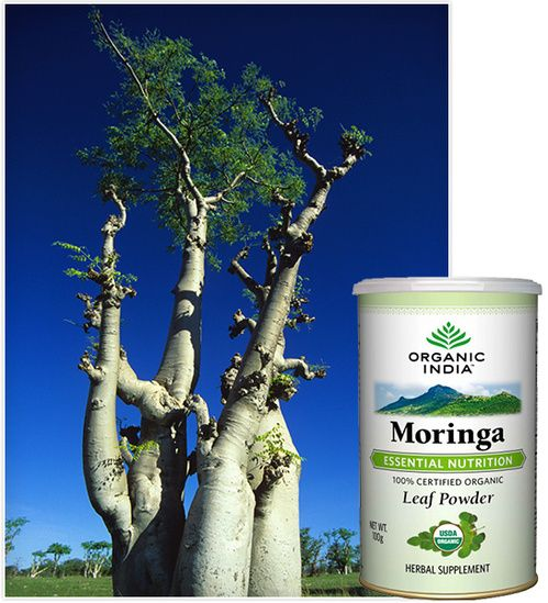 Weight Loss Moringa Tree: Small Trees, Vitamin A And The Benefits On Pinterest