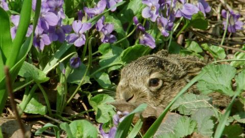 Brown Hare, Innocence, Sweet (Emotion), Resting (Animal), Baby Animal, Flower, Wilderness, 1 (Quantity), Wild Animal (Animals in the Wild), Germany, No People, Sunshine, Day,