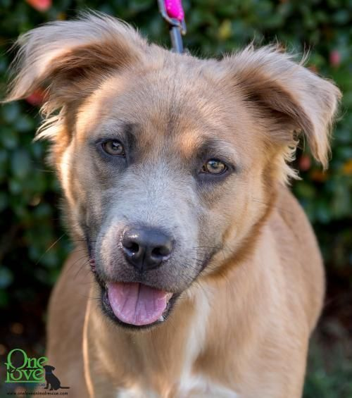Adopt Rey On Petfinder Dog Adoption Dog Mixes Animal Rescue