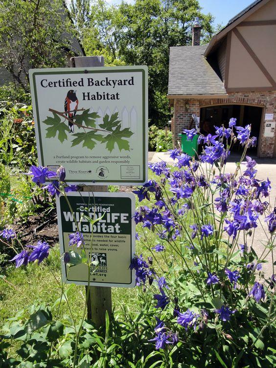 explore happy backyard gresham and more habitats backyards birds happy