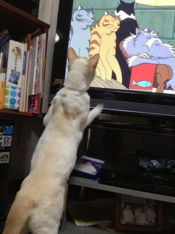 Espectador potencial disfrutando de Neko no Ongaeshi. #ghibli