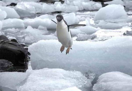 amazing animals Jump