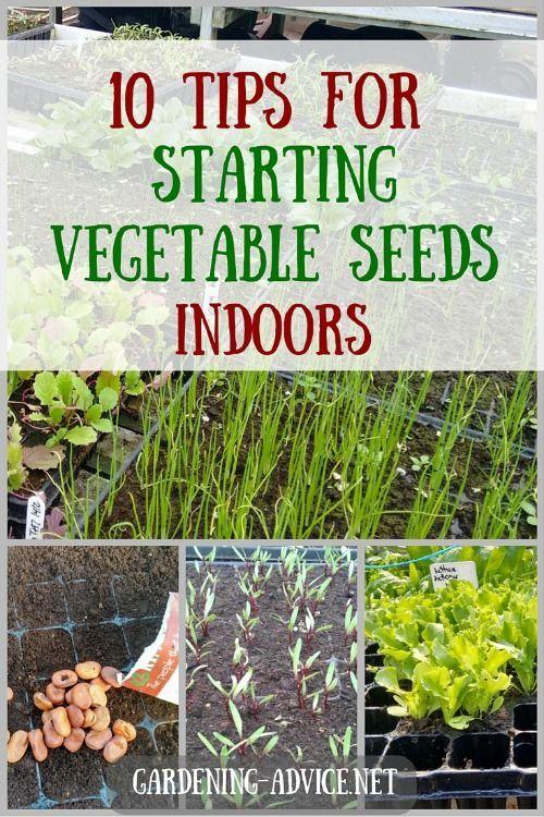 10 Tips For Starting Vegetable Seeds Indoors Starting Vegetable