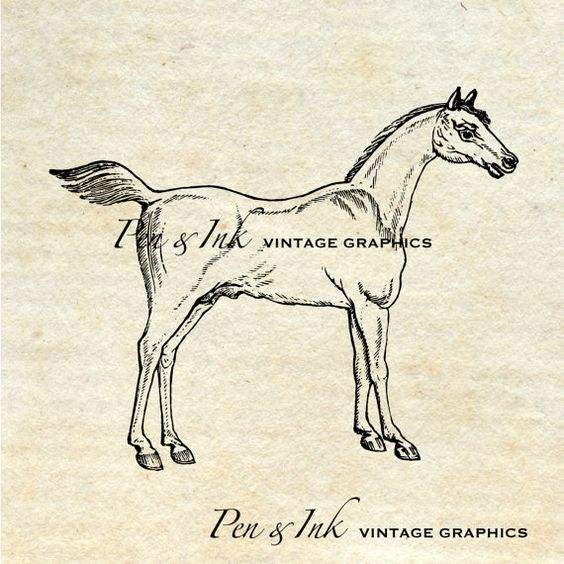Horse Digital Vintage Graphic No. 1 Antique by PenandInkVintage