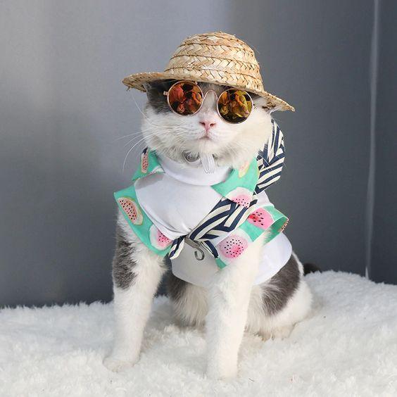 Fashionista #cat #cats