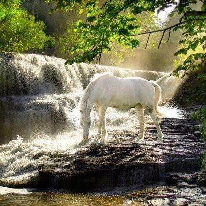 I have only been on a horse 3 times in my life.  I don't understand them, but do think they are beautiful creatures.  This is for all of you horse lovers!