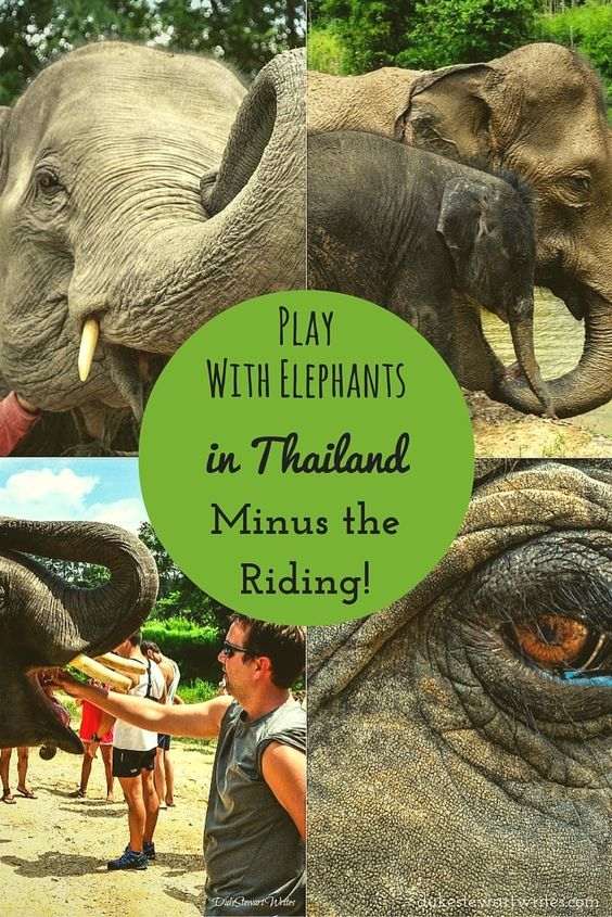 Play with Elephants in Thailand, Minus the Riding!