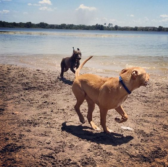Fun times at Lake Baldwin Dog Park! - Winter Park, FL - Angus Off-Leash #dogs #puppies #cutedogs #dogparks #winterpark #florida #angusoffleash: