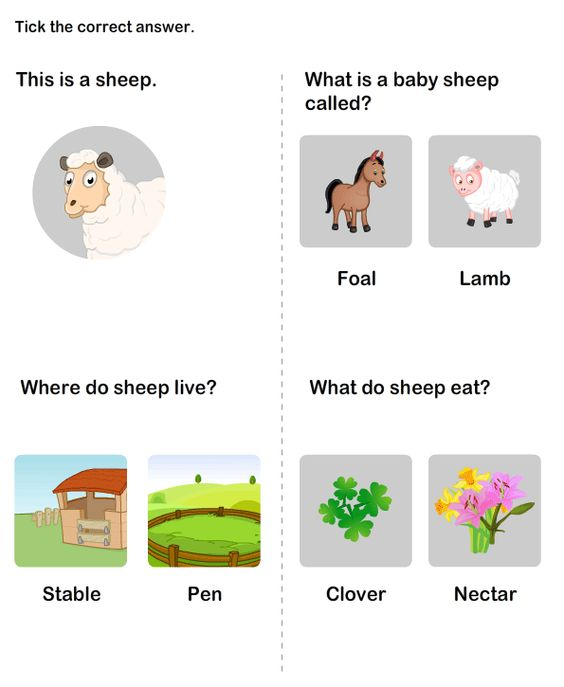 Farm Animal Worksheet 4 science Worksheets kindergarten – Science for Kindergarten Worksheets