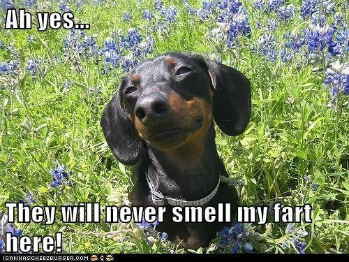 Dachshund Dog Memes Dog Memes Pet Memes Sausage Dog Memes Funny Pet Memes Weiner Dog Memes Animal M Dachshund Puppy Funny Funny Dog Memes Cute Cartoon Animals