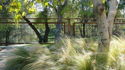 Hog Wire Fencing Google Search Cc Landscape