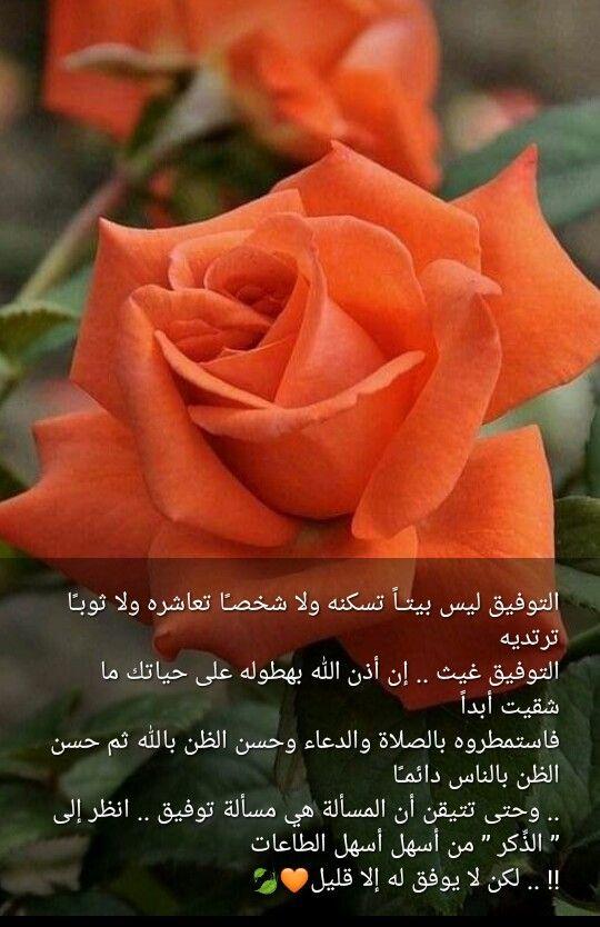 Pin By صل على النبي On صباحات ومسائات Flowers Instagram Rose