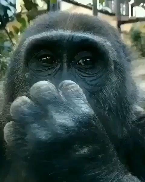 Primates nature #primates #nature & primaten natur & primates nature & naturaleza primates & primates ilustracion, primates kitchen, primates art, primates wallpaper, primates crafts, primates diy, primates dibujo, primates living, primates farmhouse, primates funny, primates christmas, primates home, primates furniture, primates illustration, primates decorating, primates lesson, primates photography, primates anatomy, primates country, primate
