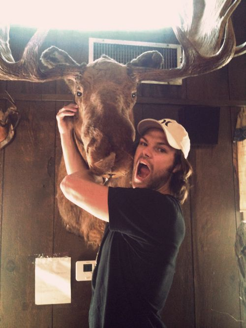 Jared Padalecki is yell-hugging this moose head.  Your argument is invalid.: Head Life, Hugging Moose, It S Moosesquared, Moose Head, Life Is Good, Invalid Mooseception, Invalid Moosey