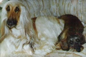 Amy and Afghan Hound friend.