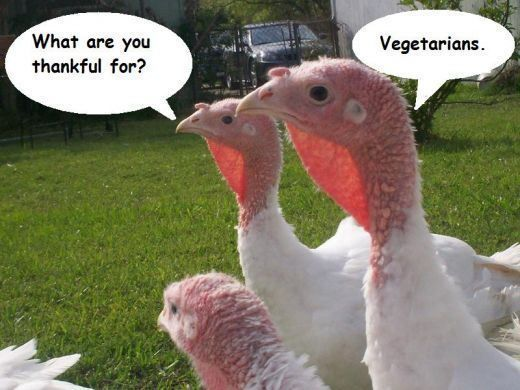 Why me, the turkey asks?!