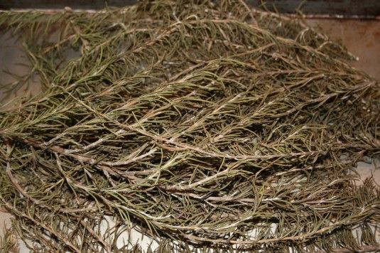 How to Dry Fresh Rosemary 11/8/15: Lay springs of fresh rosemary on a parchment lined cookie sheet. Bake at 170F for 2 hours. The dried leaves fall right of the stems. Allow to cool overnight and then store in a glass jar.