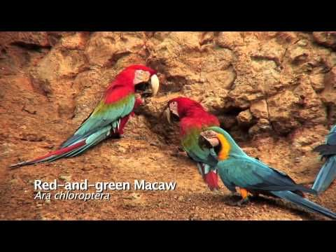 Pin By رغداء أرمنازي On هذا خلق الله In 2021 Macaw
